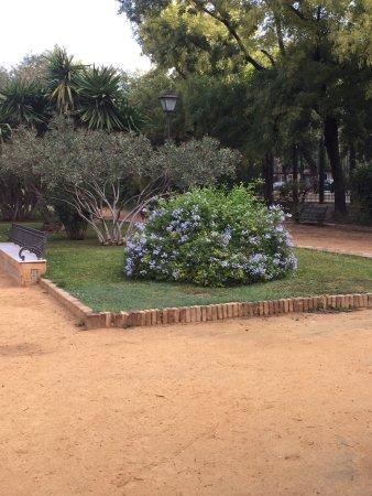 Jardines de murillo sevilla spanyolorsz g rt kel sek for Jardines de murillo