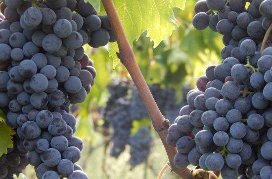 Chianti Wine Tour en Toscane