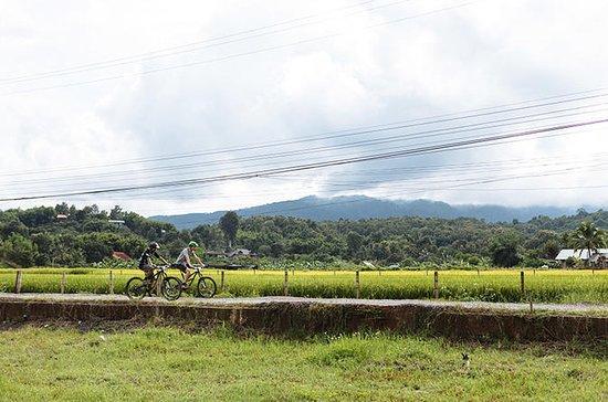 FIELDS OF GOLD  Mountain Biking Tour...
