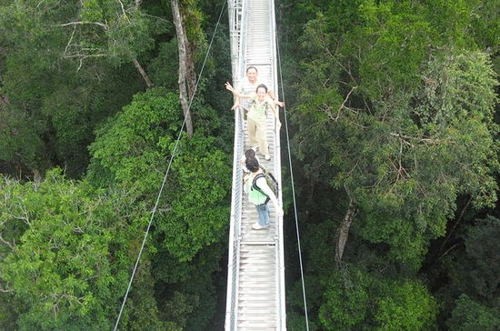 Full Day Temburong National Park...