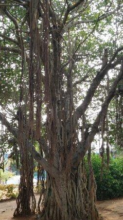 Kailasa Giri : IMG_20180104_153206_large.jpg