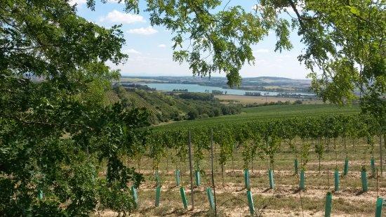Moravia, Czech Republic: Чехия - это не только пиво... Прекрасные виноградники, вкусное моравское вино!