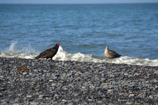 Black Sands Beach En Måge På Afveje