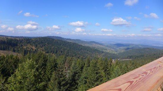 Chodnik Korunami Stromov: Panorama