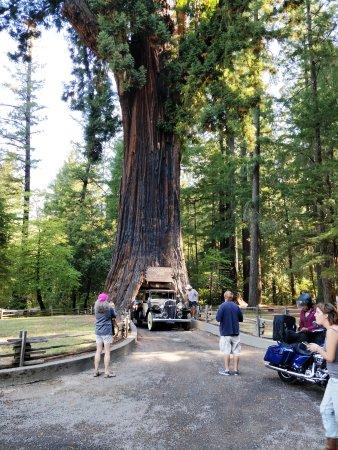 Leggett, CA: Også mange spændende køretøjer