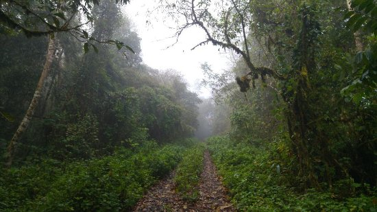 Maekok River Village Resort: Disused military road walking trip