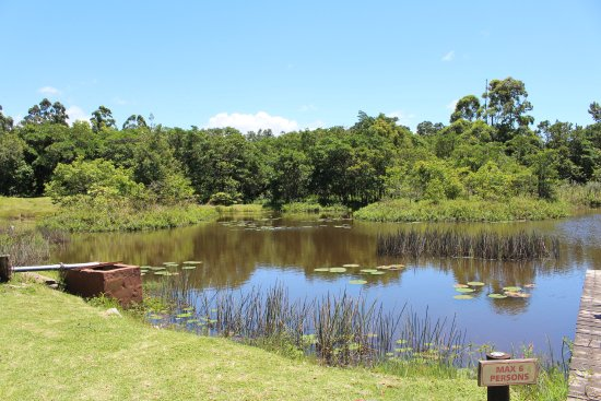 Beaver Creek Coffee Farm: Pond where people fish