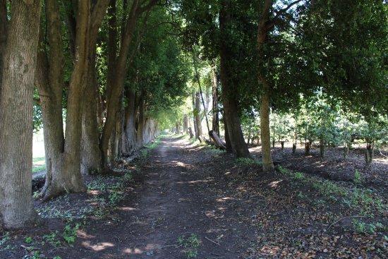 Beaver Creek Coffee Farm: Nice footpath