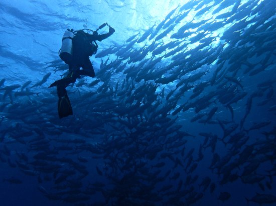 Wakatobi, Indonesia: Great picture taking in fairly mild current and great visibility!