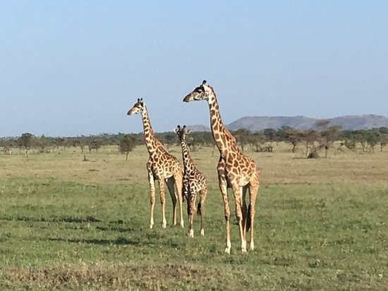 Easy Travel & Tours Ltd: Serengeti National Park