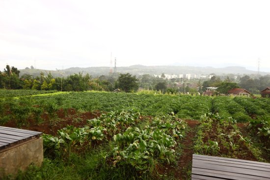 Kuntum Farmfield: you can choose your own plant to be haversting