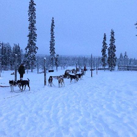 תמונה מAll Huskies