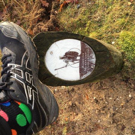 Schaapskooi Ermelo: Leuke wandelroutes