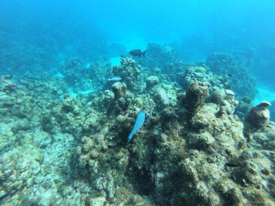 Eden Rock Diving Center: Coral off of Eden Rock