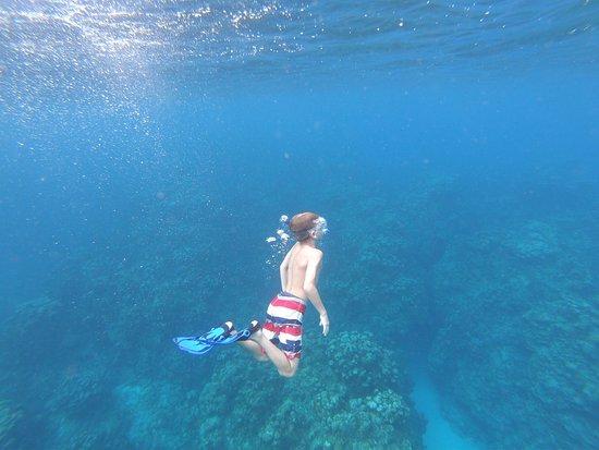 Eden Rock Diving Center: Easy enough for a young snorkeler