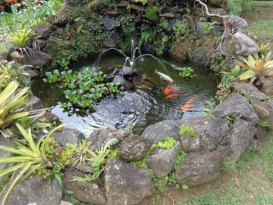 Pousada Infinito: Jardim