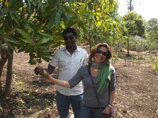 Lalibela Cross Ethiopia Trekking and Tours: Lalibela Agro Plantation Project