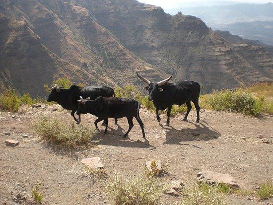 Lalibela Cross Ethiopia Trekking and Tours: Trekking Tour