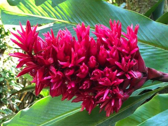 Hawaii Tropical Botanical Garden: beauty