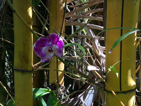 Hawaii Tropical Botanical Garden: orchid