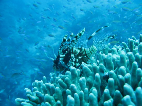 Bunaken Island, Indonesia: IMG_0990_large.jpg
