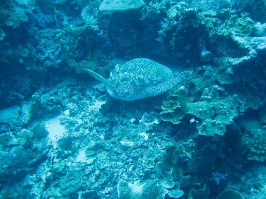 Bunaken Island, Indonesia: IMG_0996_large.jpg