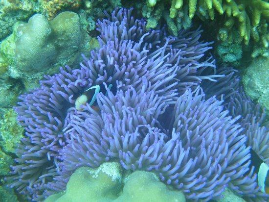 Bunaken Island, Indonesia: IMG_0983_large.jpg
