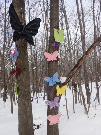 Manitoulin Island, Kanada: butterflies in the snow