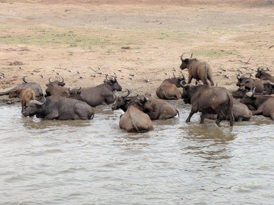 Wamba Safaris