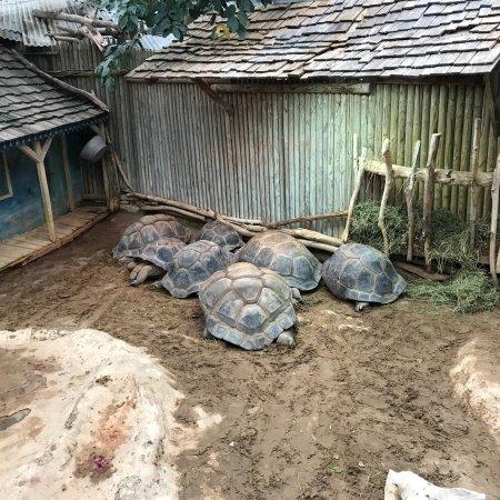 La Ferme aux Crocodiles : photo3.jpg
