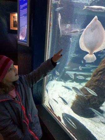 Aquarium Kiel: Min dotter på Geomar