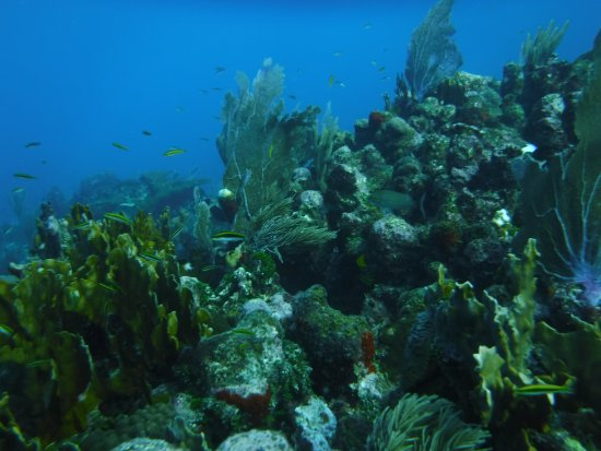 Cayos Cochinos, ฮอนดูรัส: A gorgeous reef