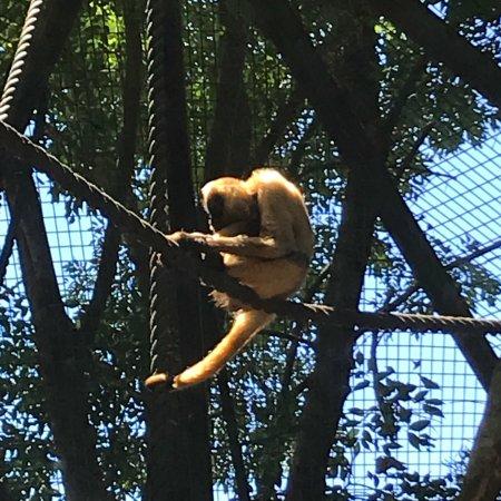 Hamilton Zoo: photo3.jpg