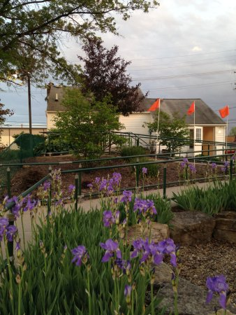 Chardon, OH: Our iris bloom in the Spring so get out to Chip's early in the season to see them.