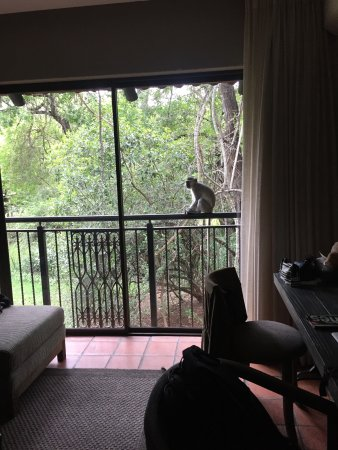 Skukuza, South Africa: rooms have view to the gardens...