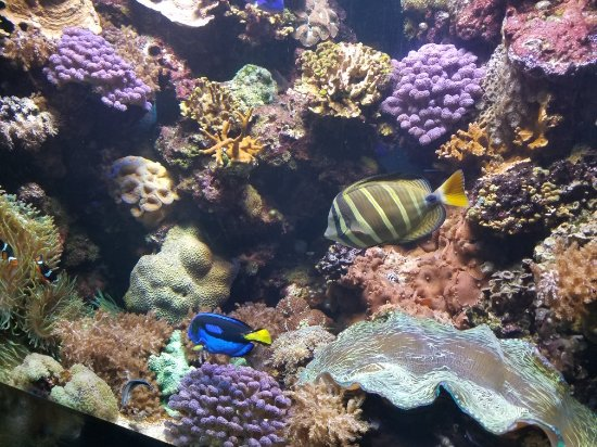 Kure Beach, NC: North Carolina Aquarium at Fort Fisher