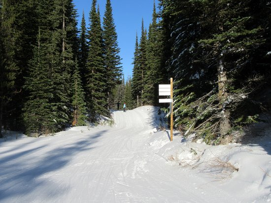 Vernon, Kanada: Well marked trails amongst dense pines along nicely groomed trails