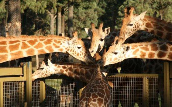 Taronga Western Plains Zoo (short 10mins drive) (296963532)