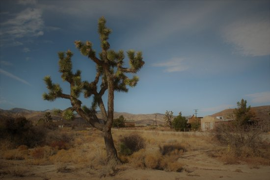 joshua tree @ pioneertown, ca