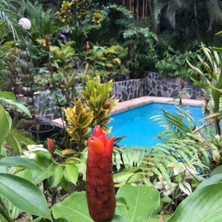Khao Sok Las Orquideas Resort: photo6.jpg