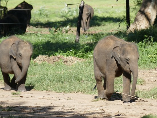 cute baby elephants going to get their milk picture of elephant