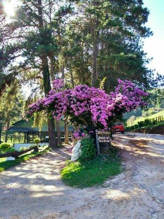 Hotel Fazenda Floresta Negra: IMG-20171201-WA0031_large.jpg