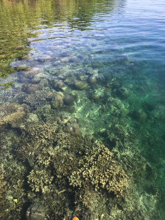 Uepi, Islas Salomón: Water straight of the dive jetty