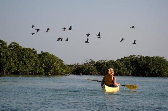 Kayak Eco Tour