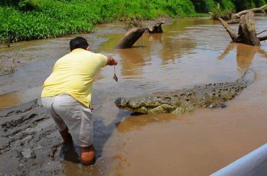 San Jose Crocodiles Safari e copa...