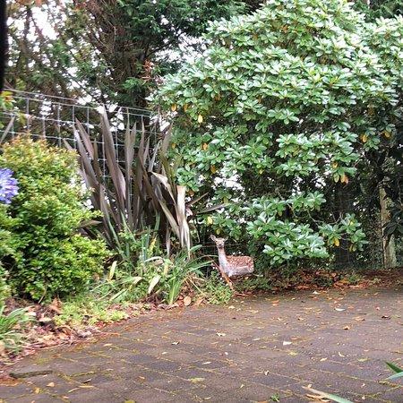 Clover Downs Homestead: photo0.jpg