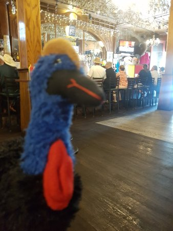 Iron Door Saloon and Grill: Cassie the Cassowary was impressed