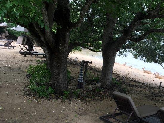 The Menjangan: Beach view