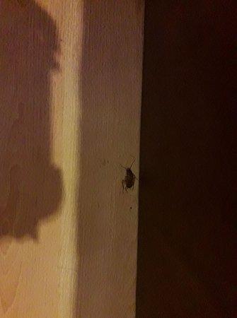 โรงแรมนันทรา เดอ คอมฟอร์ท: แมลงสาบที่ร่อนไปทั่วห้อง แม้ตายแล้ว