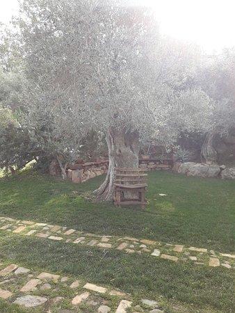 Villamassargia, Italia: IMG-20180106-WA0010_large.jpg